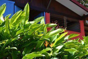 cabane tropicale